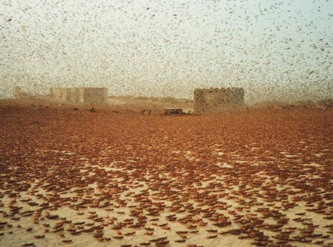 388616main_locust swarm